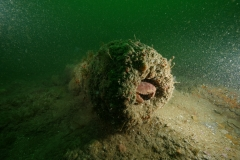 Small cannon on fog wreck (2)